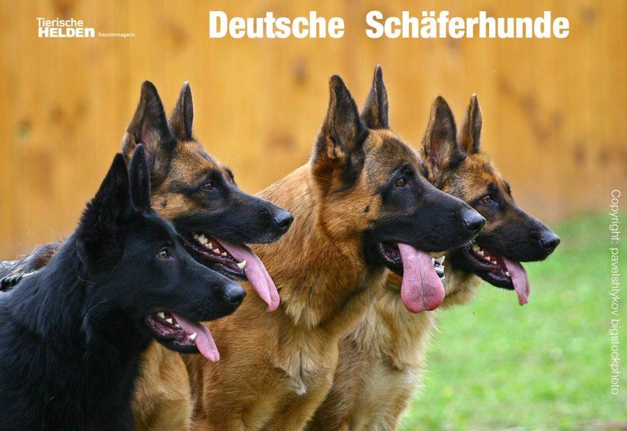 10-22-charakter-schaeferhund