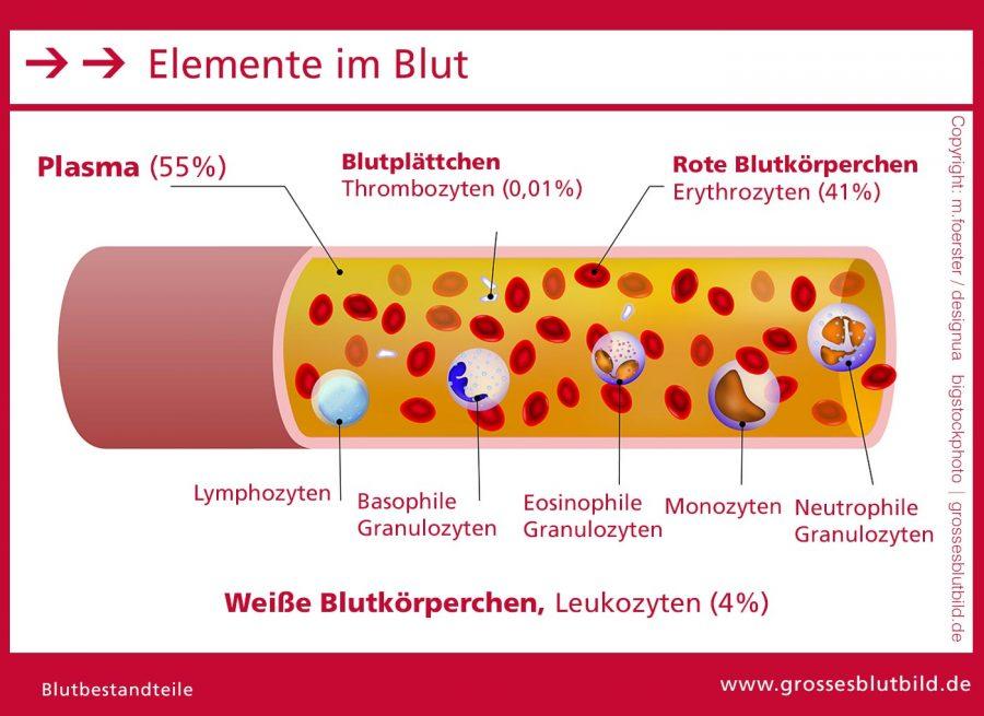 Blut-Bestandteile-Elemente