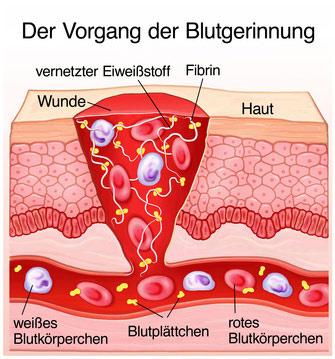 Blutgerinnung_bild
