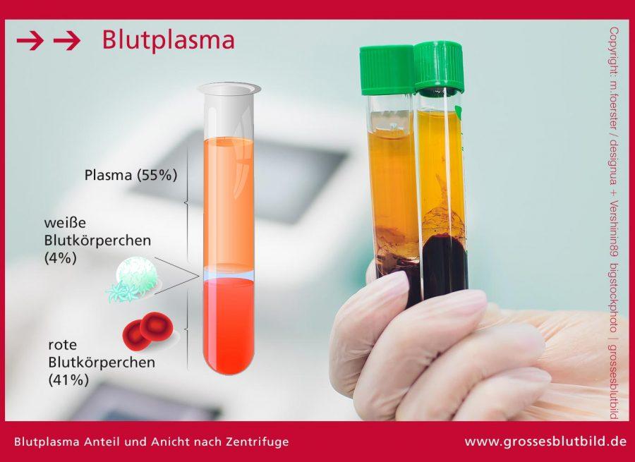 Blutplasma-3D-Ansicht