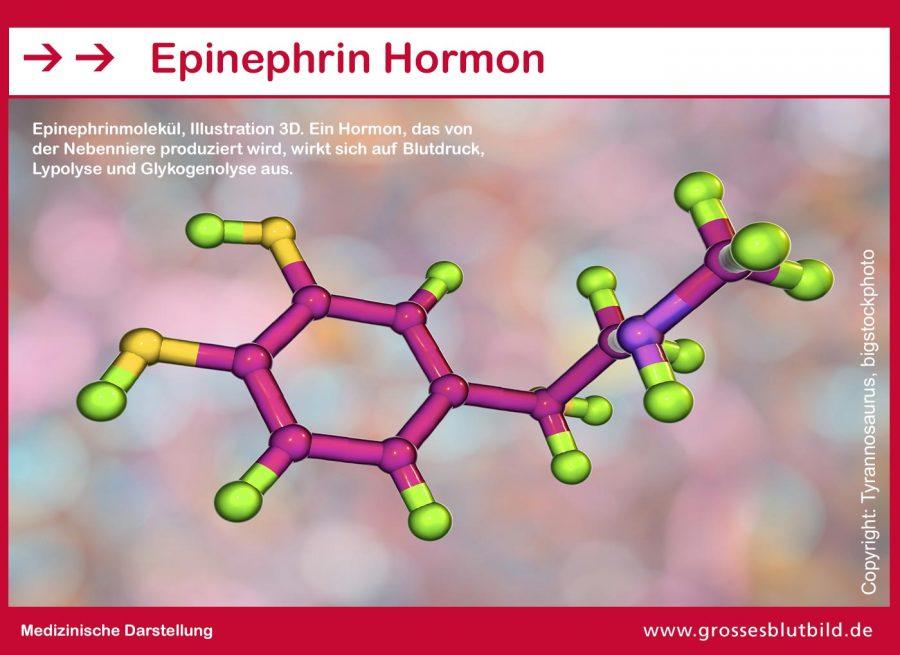 Epinephrin-Hormon