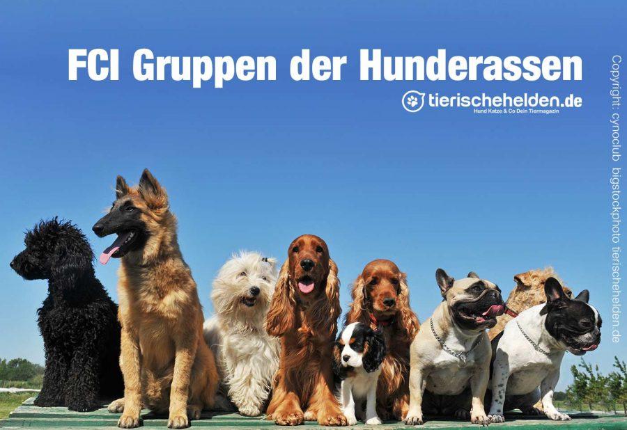 FCI-Gruppen-Hunderassen