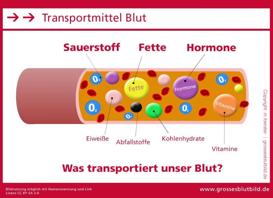 Hormone-im-Blut