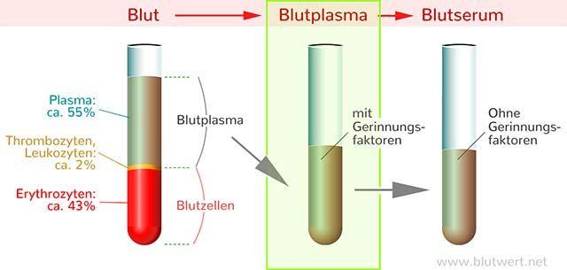 blutplasma-bestandteile
