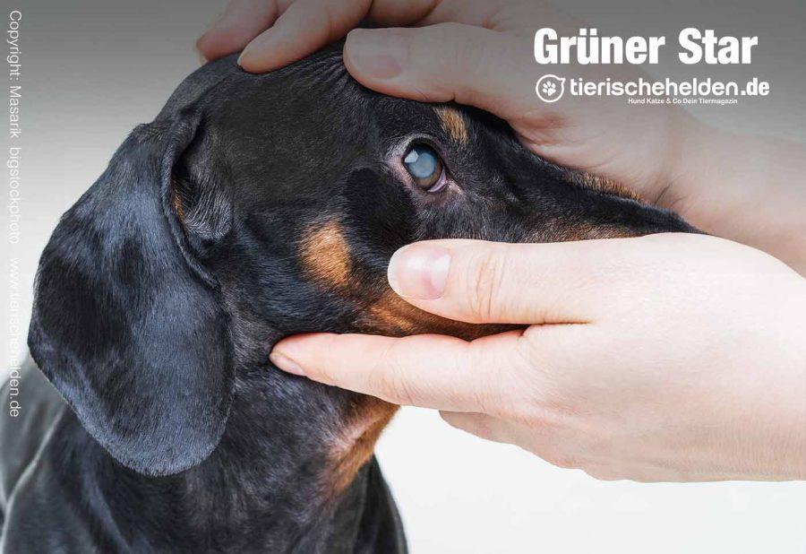gruener-star-augen-hund