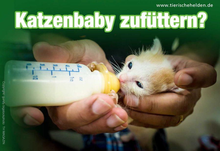 muss-man-katzenbabys-zufuettern
